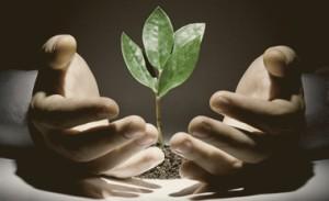 Venture Capital Growth